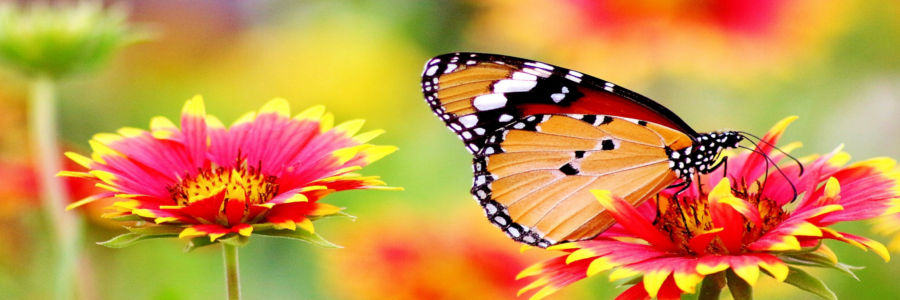 picture of butterfly on flower